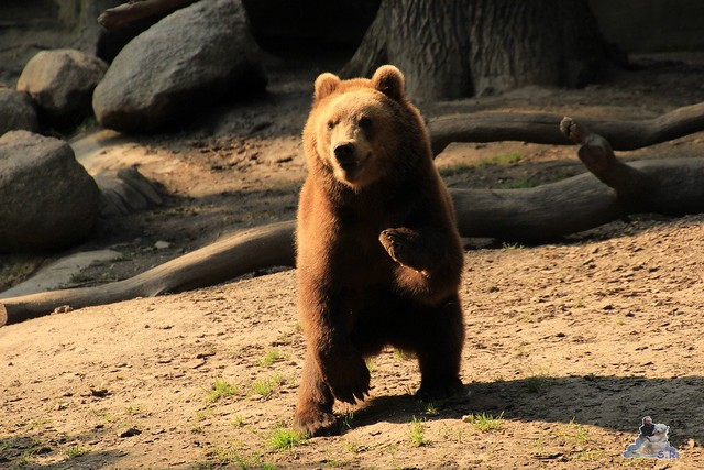 Tierpark Hagenbeck 04.07.2015  234