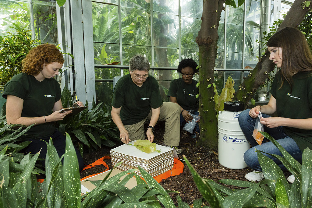 Museum Of Natural History Internships For High School Students