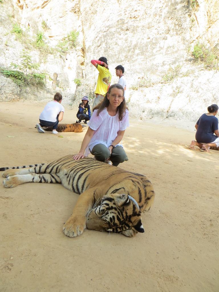 Sai Yok (Kanchanaburi) Thailand  City new picture : Tiger | Sai Yok, Kanchanaburi, Thailand IMG 6429 | Carlos Reis ...