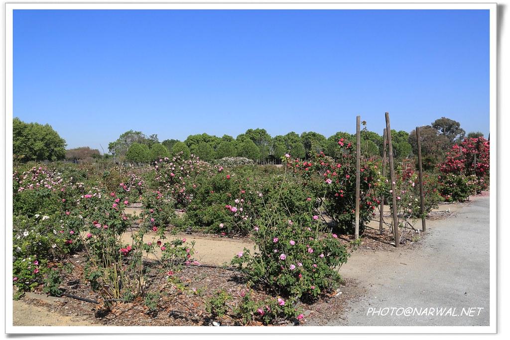 San Jose Heritage Rose Garden San Jose Heritage Rose Garde Flickr