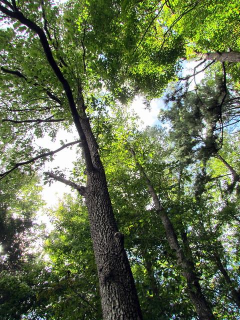 Annie Louise Wilkerson Md Nature Preserve Park