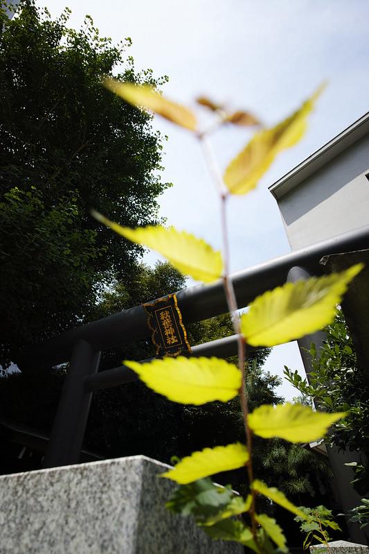 20150620_20_SIGMA dp0 Quattro First Snap in Tokyo