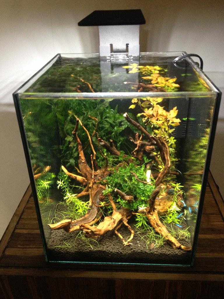 Ecopico Planted Desktop Aquarium Inspired By A Few