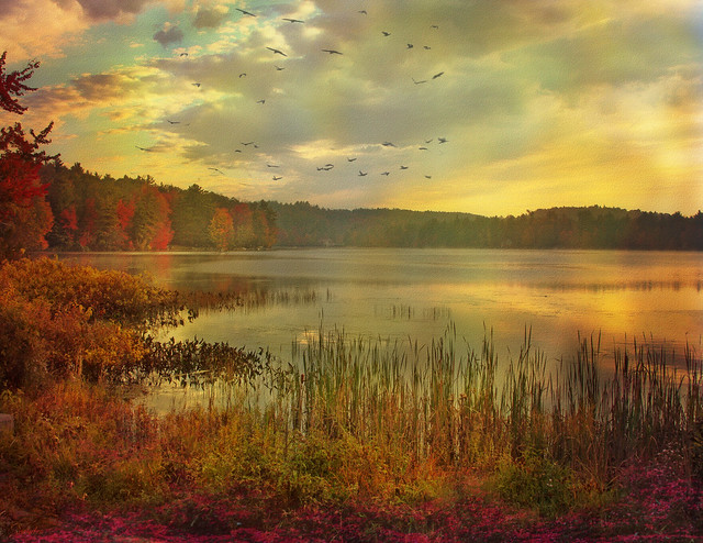 --autumn morning on the pond--