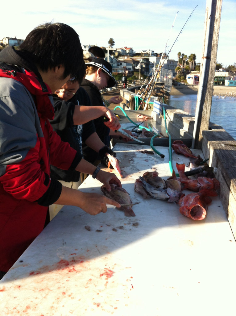 Scaling rockfish capitola fishing cleaning and scaling for Capitola fishing report