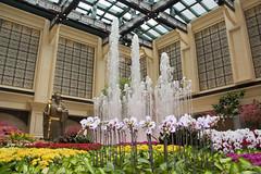 LCA14 - Hotel Atrium
