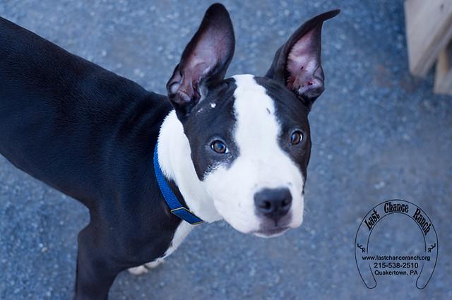 Ranch Dog Rescue Kane