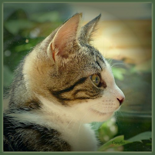 Profile of little Nermal | by Cajaflez