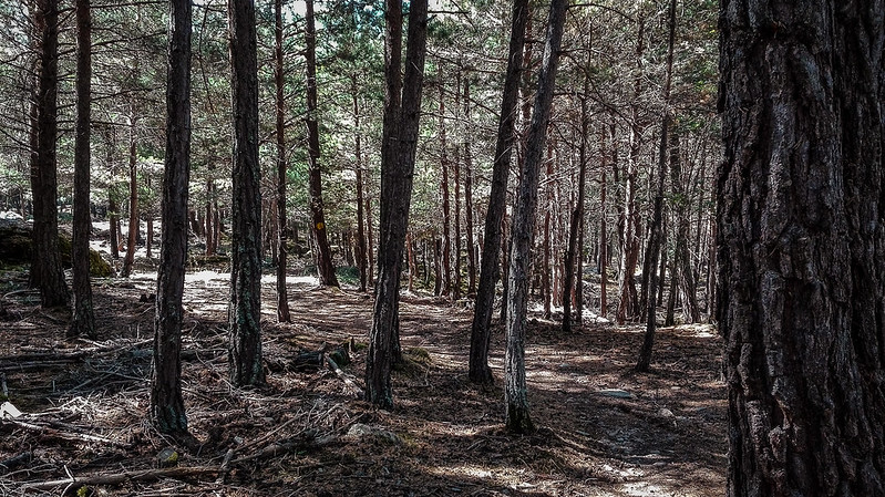 De regreso por el Bosc de Virós