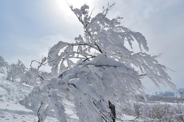 樹氷・スノーモンスター