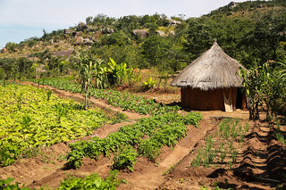 Makoni Organic Farmers Association | by undpzimbabwe