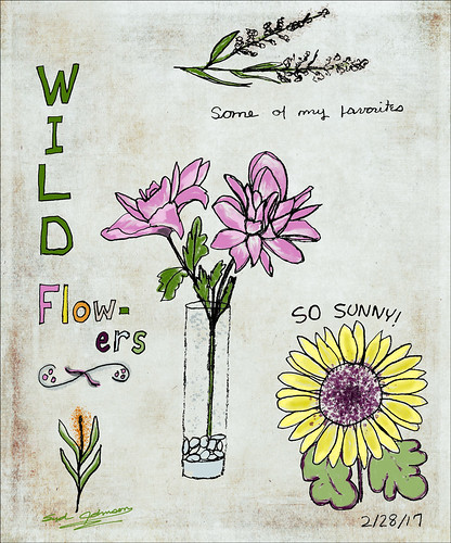 Wild Flower Drawings