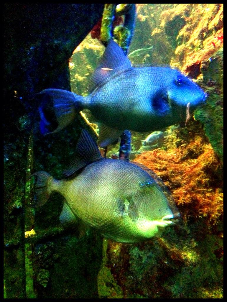 grand aquarium de st malo ewan mcintosh flickr