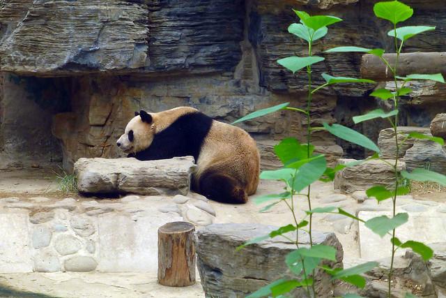 Beijing Panda Chinese Restaurant Philadelphia Pa