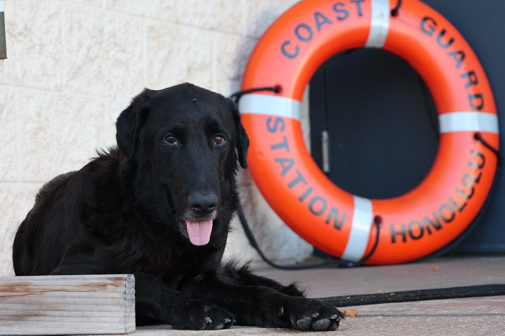 Dog Rescued In Scalford