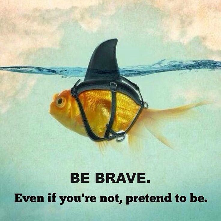 Fish Motivational Quotes: Be Brave. #fish #shark #sharknado #funny #ocean #quote #po