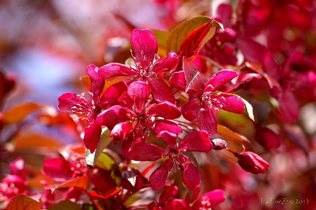 Couleur du printemps dans la rue 01 soleil jardinage et flickr - Couleur du printemps ...