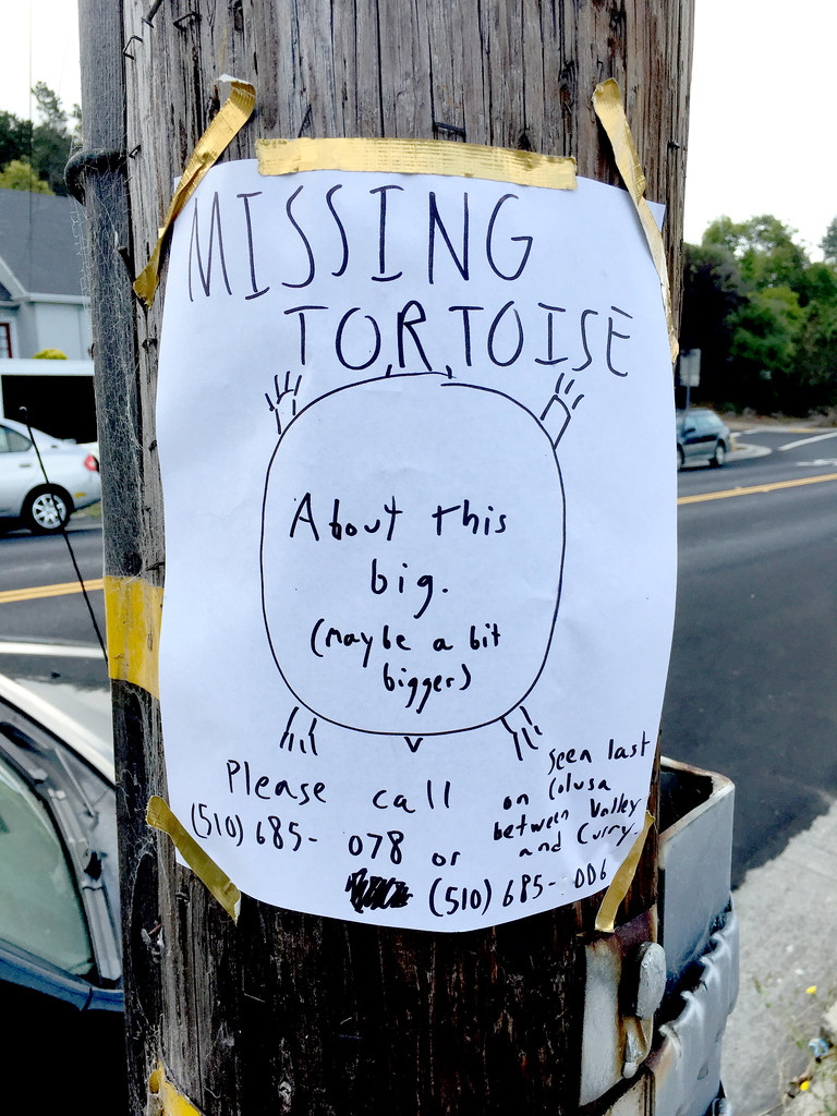 Missing Tortoise | by efo
