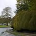 The Yew Hedge In Brampton Bryan