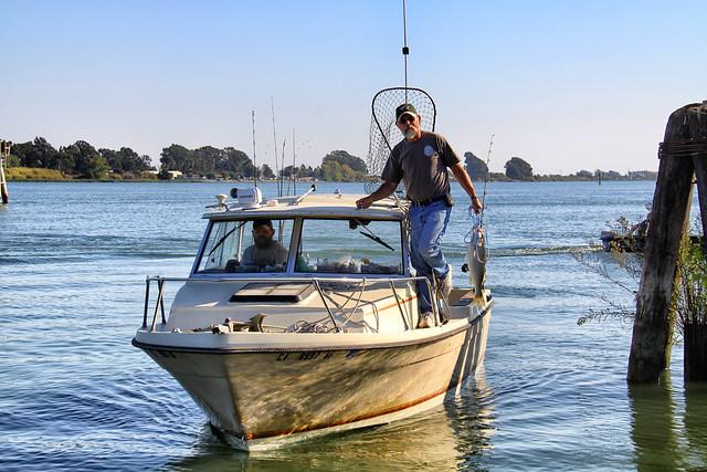 Latest Fishing Reports Spike Island Widnes