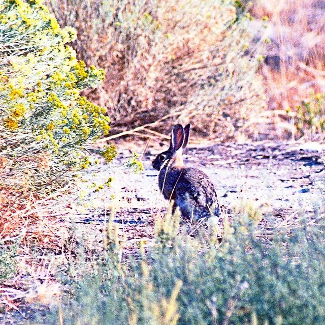 Rabbit Food Carson City