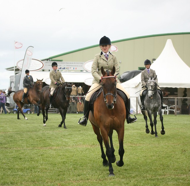 Retraining of Racehorses Final