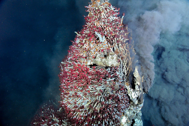 This black smoker and pinnacle are covered by tube worms (Ridgeia piscesae) observed at the Endeavour segment of the Juan de Fuca Ridge (2130m) on July 23, 2011.