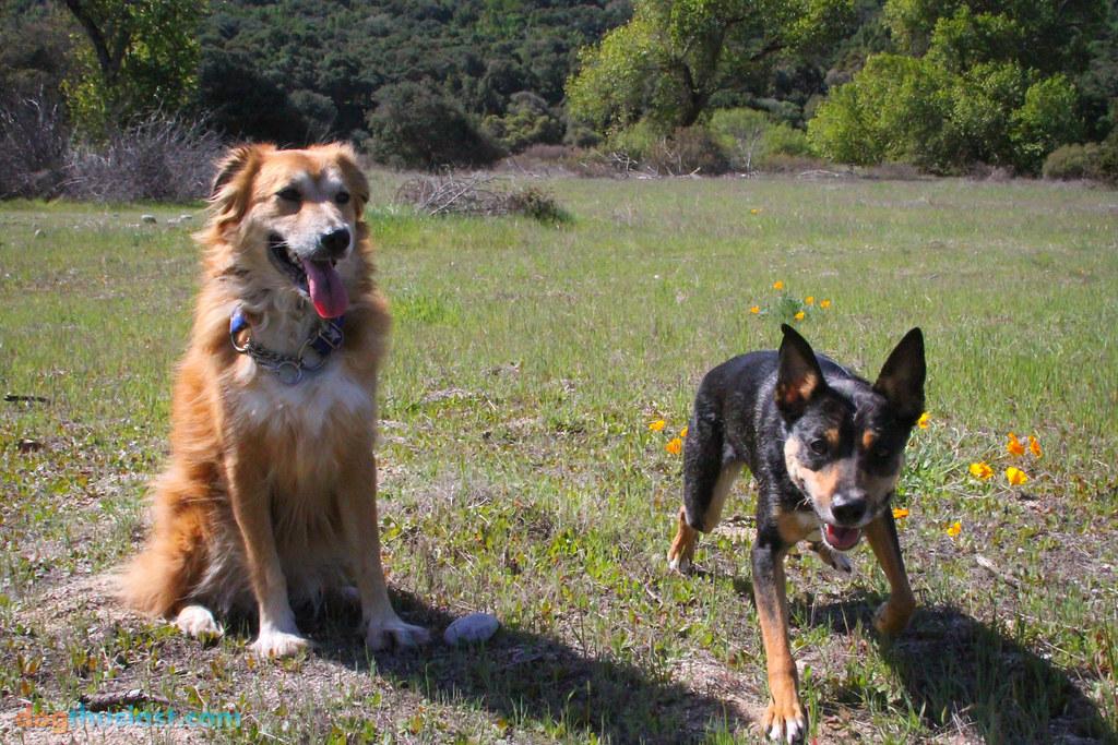 Carmel Ca Dog Friendly Camping