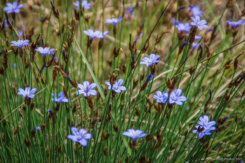 Flores en el camino de Marmellar