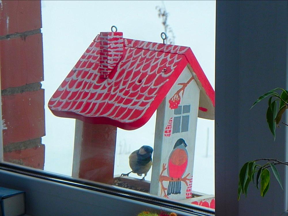 птички 18