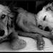 Vida de perros [Explored]
