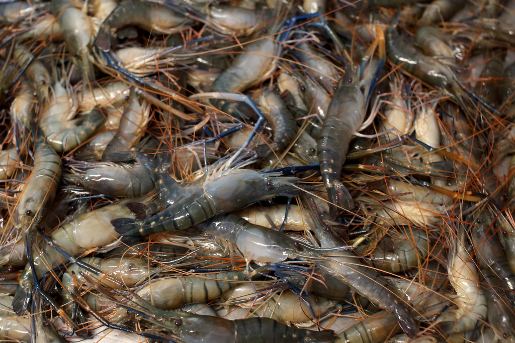 Shrimps at a local fish market in khulna bangladesh phot for Mexican walking fish for sale