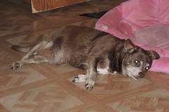 Hyzzie using her bed