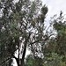 nikon nikkor 35-200mm 3.5 D3 Felling a tree 2