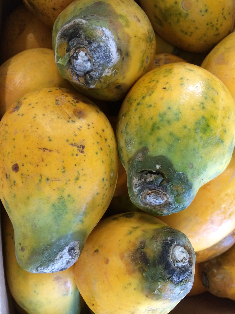 Stem-end, fungal rot of papaya | Location: Roadside fruit ...