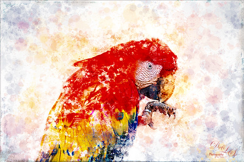 Red Macaw at the Palm Beach Zoo