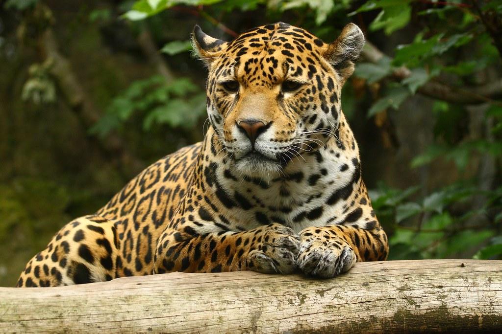 fauna de la selva yahoo dating
