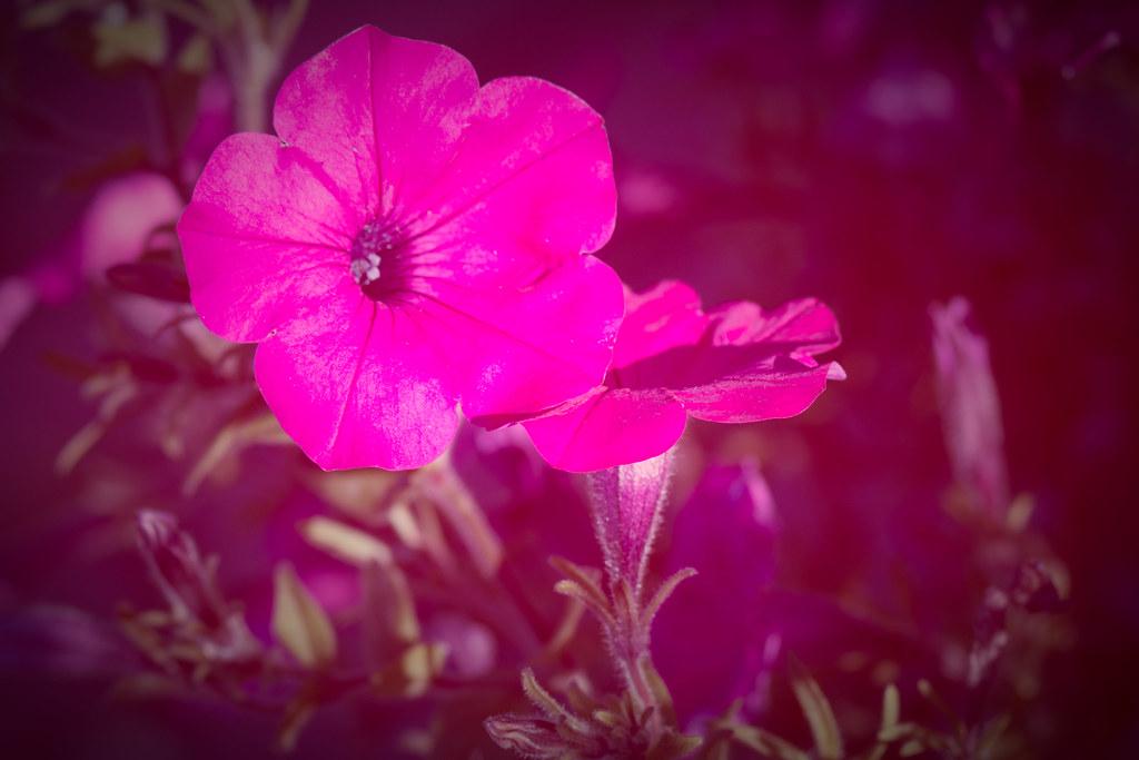 erotika free sharon pink