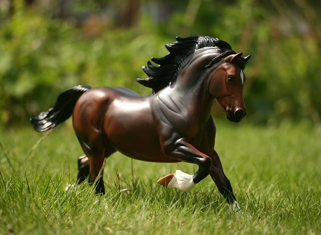 EA Fantastic Mr Copperfox - Welsh Cob - stallion - OF - EG3