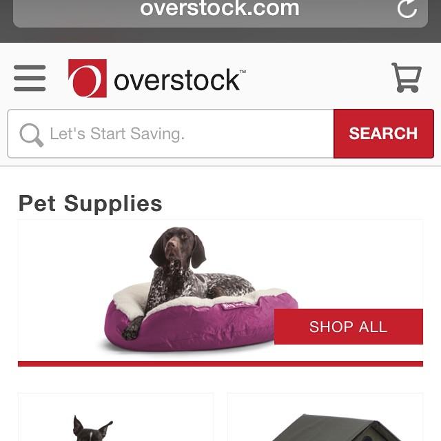 Overstock com has