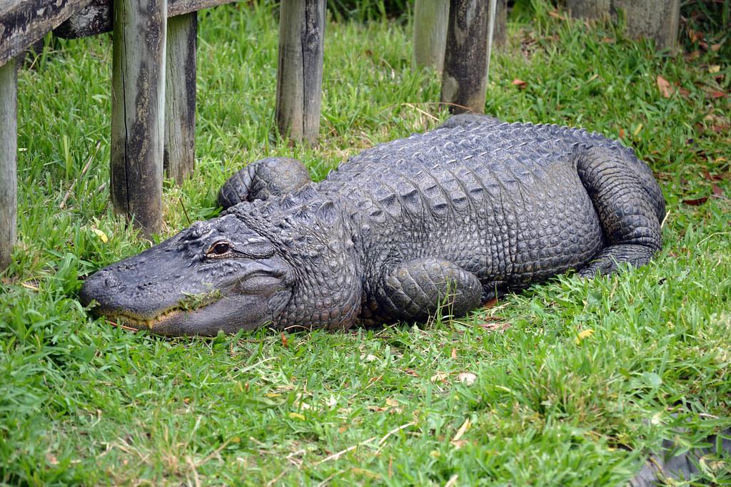 Myrtle Beach Alligator Adventure Price
