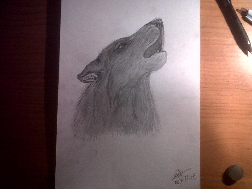 Lobo aullando Dibujo a lpiz  Aull entonces el Lobo pa  Flickr