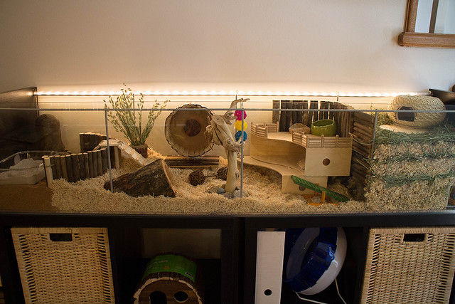 Ikea hack detlof hamster cage flickr photo sharing for Ikea hamster cage