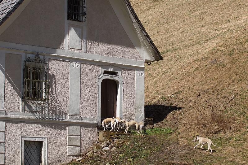 Whippetisektion eines der anderen Häuser