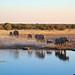 Top 5 Safaris in Africa - DNM List