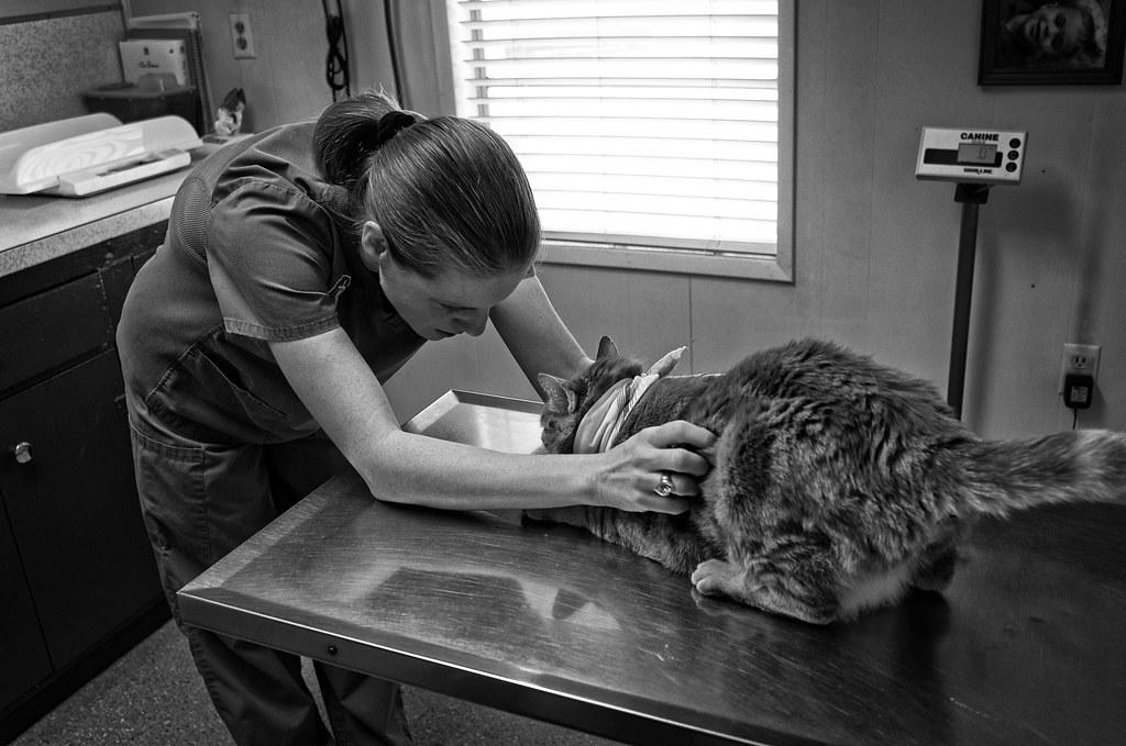 pet check up