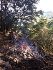 Brûlage des végétaux des carbunari de Ranedda