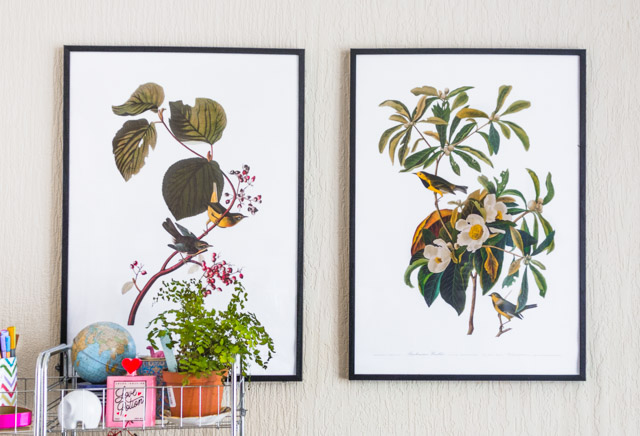 botanical posters with birds