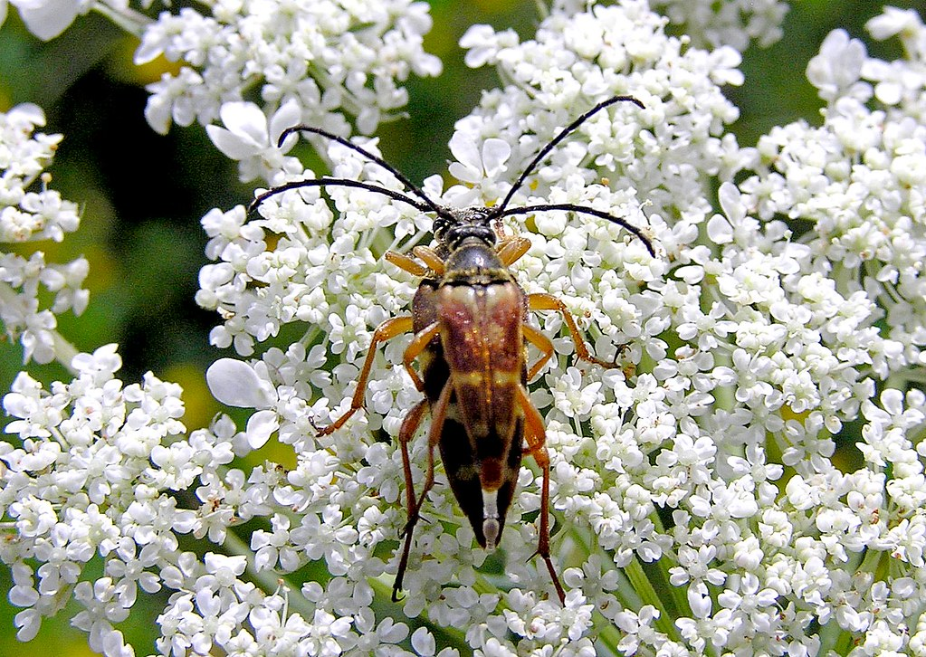 Beetle Reproduction Beetle Love   Here is ...