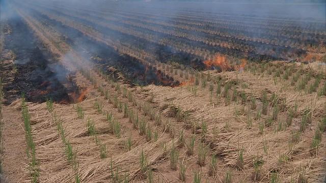 處理稻草最好的方式就是「翻耕入土」  照片來源:公共電視我們的島。